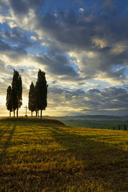 IBXDJS04316671 Cypress (Cupressus), at San Quirico d'Orcia, Val d'Orcia, Province of Siena, Tuscany, Italy