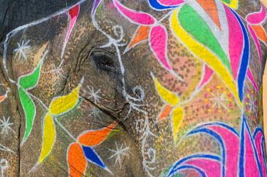 IBXOMK02069292 Painted Elephant, Amber Fort, Jaipur, Rajasthan, India