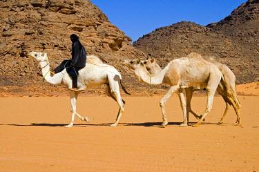 IBXGUF00108048 Tuareg nomad with dromedaries Acacous Mountains Libya