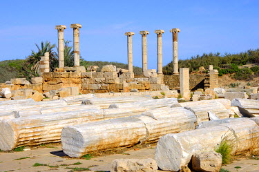 IBXGUF00221867 Lying and standing ancient columns with ionic capital, Ruins of the Roman City Leptis Magna, Libya, Africa