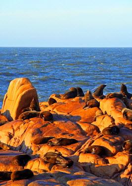 URU0011AW Uruguay, Rocha Department, Cabo Polonio, Colony of the Sea Lions on the rocky coast.