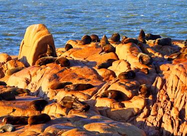 URU0012AW Uruguay, Rocha Department, Cabo Polonio, Colony of the Sea Lions on the rocky coast.