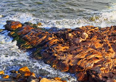 URU0033AW Uruguay, Rocha Department, Cabo Polonio, Colony of the Sea Lions on the rocky coast.