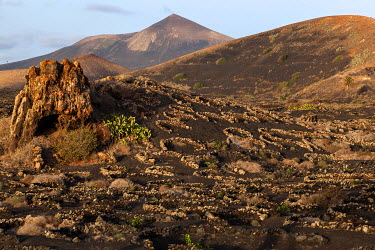 IBXHAL04033715 Typical vineyards in dry cultivation in volcanic ash, evening light, behind the Guardilama volcanic mountain, wine-growing region La Geria, Lanzarote, Canary Islands, Spain