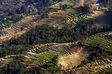 IBXHAL04060423 Terrace cultivation, field terraces at Nagarkot, Nepal