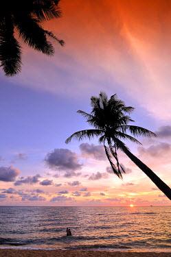 IBXGZS01178597 Palm tree at atmospheric sunset on the beach, sea, Phu Quoc, Vietnam