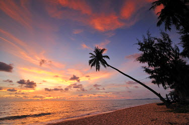 IBXGZS01178602 Palm tree against red evening sky, atmospheric sunset, Phu Quoc, Vietnam