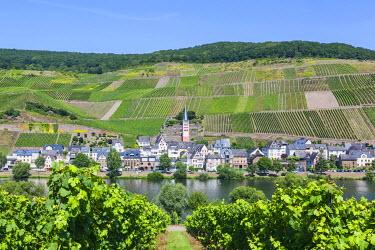 TPX56837 Germany, Rhineland-Palatinate, Moselle, Zell