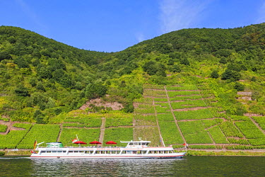TPX56853 Germany, Rhineland-Palatinate, Moselle, Cruiseboat and Vineyards