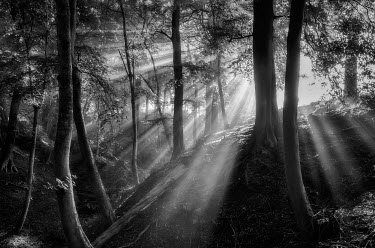 ENG13474AW England, West Yorkshire, Calderdale. Shafts of sunlight filtering through trees on a misty autumn morning.