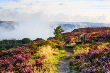 ENG13479AW England, West Yorkshire, Calderdale. Path across Norland Moor with heather in bloom and mist in valley below.