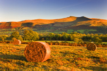 WAL7530AW Bracken bales on Mynydd Illtud Common, looking towards Corn Du and Pen y Fan in the Brecon Beacons National Park, Powys, Wales, UK. Autumn (October) 2009