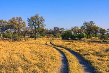 AF05IHO0155 Botswana. Okavango Delta. Khwai concession. Safari vehicle tracks snake though the bush.