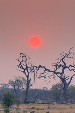AF05IHO0321 Botswana. Chobe National Park. Savuti. Harvey's Pan. Sunset above gnarled dead trees.