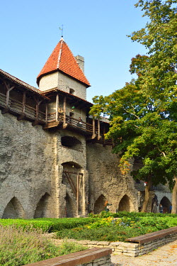 EST1207AW Medieval defence walls, dating back to the 14th century. Tallinn, Estonia