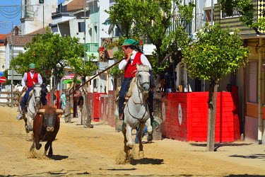 "POR9061AW Traditional running of wild bulls by the ""campinos"", during the Barrete Verde (Green Cap) festivities. Alcochete, Portugal"