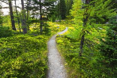 CN02RBS0000 Opabin Plateau trail above Lake O'Hara, Yoho National Park, British Columbia, Canada