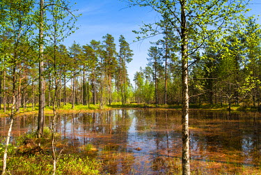 EU35NTO0121 Viru Bog (Viru Raba) peat swamp, Lahemaa National Park, Harjumaa, Laane-Virumaa, Estonia, Baltic States