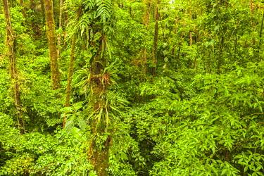 SA22BJY0047 Central America, Costa Rica, Arenal. Rain forest foliage.