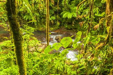 SA22BJY0051 Central America, Costa Rica. Monte Verde, La Paz River, rain forest