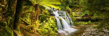 AUS2472AW Liffey Falls, Tasmania