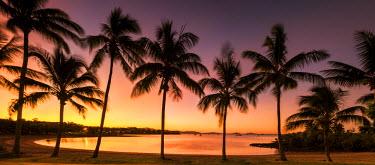 AUS2541AW Palm Trees at Sunset, Airlie Beach, Queensland, Australia