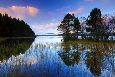 SCO34394AW Loch Garten Reflections, Highland Region, Scotland