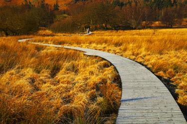 ENG13762AW Boardwalk Through Meadow, Borrowdale, Lake District National Park, Cumbria, England