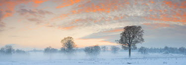 ENG13898AW Trees in Winter Mist at Sunset, Norfolk, England