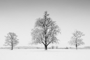 ENG13899AW Three Trees in Winter, Norfolk, England