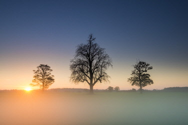ENG13940AW Three Trees in Mist at Sunrise, Norfolk, England
