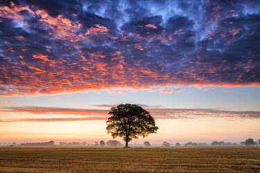 ENG13974AW Tree at Sunrise, Norfolk, England