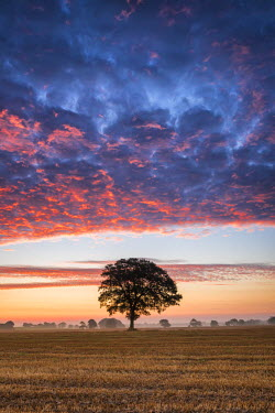 ENG13975AW Tree at Sunrise, Norfolk, England