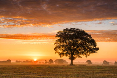ENG13978AW Tree at Sunrise, Norfolk, England