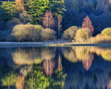 ENG13994AW Yew Tree Tarn Reflections, Lake District National Park, Cumbria, England