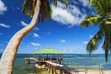 SEY1025AW Jetty & Palm Tree, Praslin, Seychelles