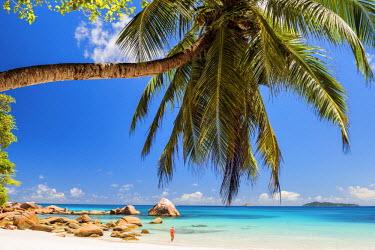 SEY1029AW Palm Tree over Anse Lazio Beach, Praslin, Seychelles
