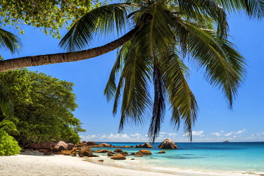 SEY1030AW Palm Tree over Anse Lazio Beach, Praslin, Seychelles