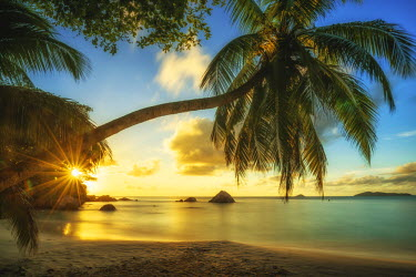 SEY1031AW Palm Tree at Sunset, Anse Lazio Beach, Praslin, Seychelles