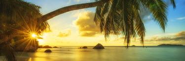 SEY1032AW Palm Tree at Sunset, Anse Lazio Beach, Praslin, Seychelles