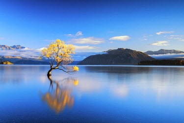 NZ9080AW Wanaka Tree Reflections, Lake Wanaka, New Zealand