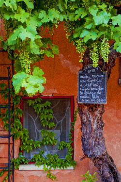 FRA9498AW Grapevine Framing Restaurant Window, Roussillon, Provence, France