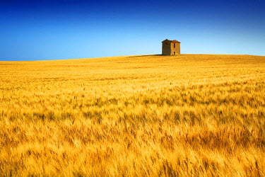 FRA9373AW Lone Barn in Field of Barley, near Puimoisson, Alpes de Haute, Provence, France