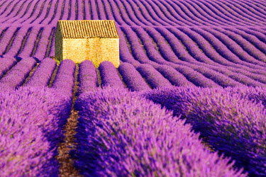 FRA9434AW Stone Barn in Field of Lavender, Provence, France