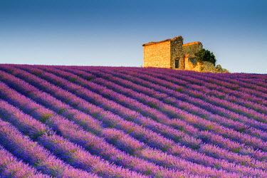 FRA9440AW Stone Barn in Field of Lavender, Provence, France
