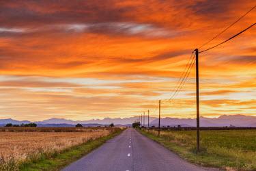 FRA9469AW Road at Sunrise, Provence, France