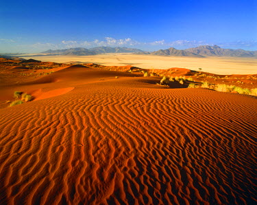 NAM6260AW Sand Dune, Namib Rand, Namibia, Africa