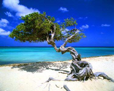 ARU0001AW Divi Divi Tree, Aruba, Lesser Antilles, Caribbean