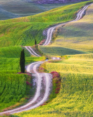 ITA9810AW Winding Road & Cypress Tree, Tuscany, Italy