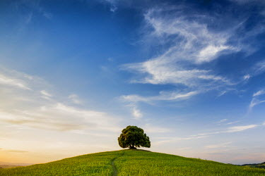 ITA9816AW Lone Tree on Hill, Tuscany, Italy